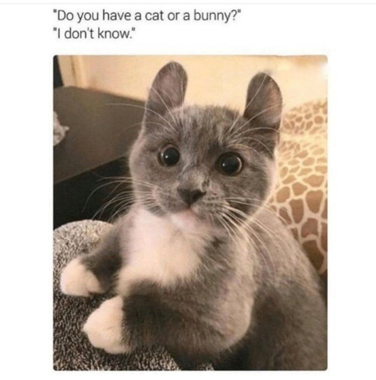 yielding telling Butterfly. .. (bunny+cat)+(cat+bunny) Bat cunny