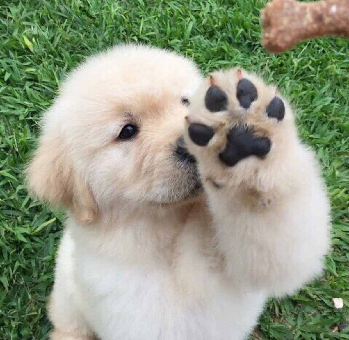 You said, you want to see my paws. .