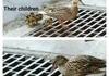 Aw, duck