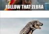 Follow that Zebra!