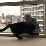 everyone loves kittys :3.