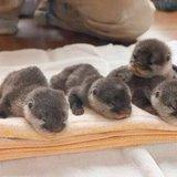 Otter-ly adoreable