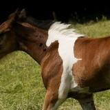 Theres a Horse In This Horse