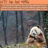 The Lonly Brown Panda