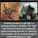 yo, come take a hit from this scorpion...